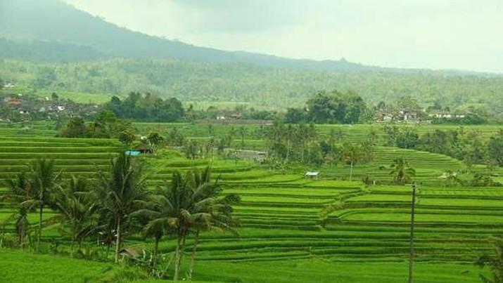 Subak Bali (Angela Jennifer Aroemrasni/dTraveler)