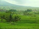 Apa Manfaat Subak di Bali, yang Tampil di Google Doodle?