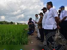 Diutus Jokowi, Wamenhan Blusukan Cek Food Estate