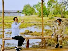 Bukan Mentan, Ini Alasan Jokowi Pilih Prabowo di Food Estate