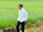 Jokowi Lampu Merah & Kawal Covid-19 Bilang Pandemi Baru Mulai