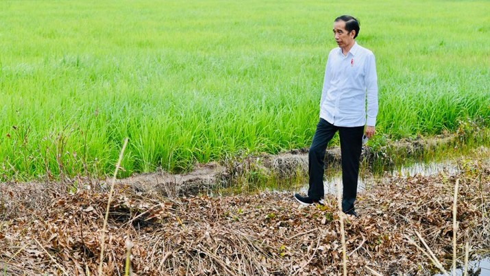Presiden Joko Widodo meninjau pembangunan peningkatan jaringan reklamasi rawa di Tahai Baru, Kabupaten Pulang Pisau, Kamis (9/7/2020). (Biro Pers Sekretariat Presiden/Laily Rachev)