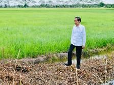 Apa Saja Langkah Jokowi Selamatkan RI dari Jurang Krisis?