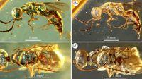 Zaman Dinosaurus Sudah Ada Tawon, Bentuknya di Luar Dugaan