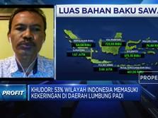Ini Syarat Agar Program Food Estate Jokowi Bisa Berhasil