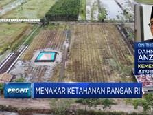 Percepat Program Food Estate, Prabowo Kerahkan Prajurit TNI