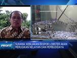Pengamat: Ekspor Benih Lobster Akan Rugikan Nelayan
