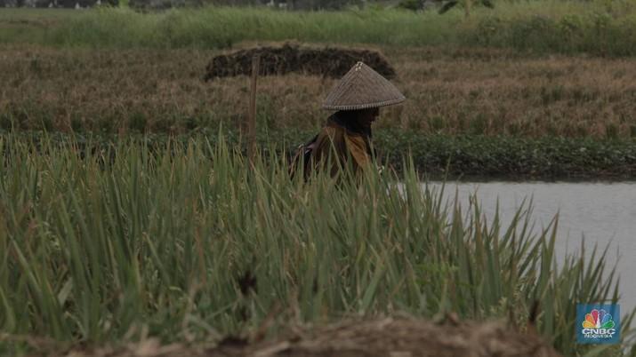 Ilustrasi panen padi. (CNBC Indonesia/Muhammad Sabki)