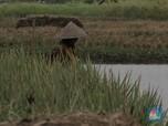 Awas! La Nina Bisa Acak-Acak Ramalan Positif Pertanian RI