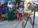 Atraksi Topeng Monyet, Meski Dilarang Tapi Jadi Hiburan Anak
