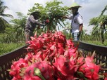 Perta Arun Gas Dorong Petani Binaan Kembangkan Agrowisata