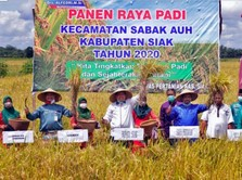 Kebal Corona, Panen Padi Siak Riau Meningkat dari Tahun Lalu