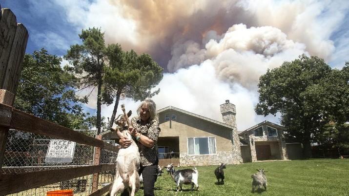 Kebakaran hutan di California, Amerika Serikat. (AP/Ringo H.W. Chiu)