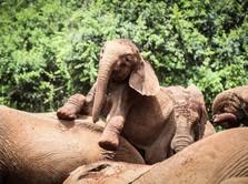 Roho, Gajah Imut Simbol Perayaan Debut V BTS