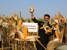 Kebal Corona, PDB Pertanian Q2-2020 Melesat Saat Pandemi