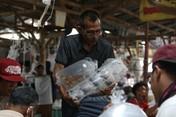 Terbesar di RI! Begini Geliat Pasar Ikan Hias Parung Bogor