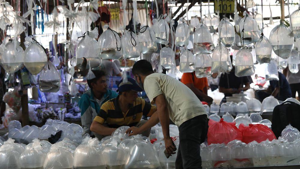 Aktivitas jual beli di sentra penjualan ikan hias di Parung, Bogor, Jawa Barat. (CNBC Indonesia/Andrean Kristianto)