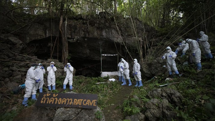 Researchers set up equipment for catch bat in front of cave inside Sai Yok National Park in Kanchanaburi province, west of Bangkok, Thailand, Friday, July 31, 2020. Thai researchers are collecting samples from bats to test if they could also carry a novel coronavirus, similar to what bats in China are found to have. The result could help answer the question everyone is asking – what's the origin of the COVID-19 virus? (AP Photo/Sakchai Lalit)