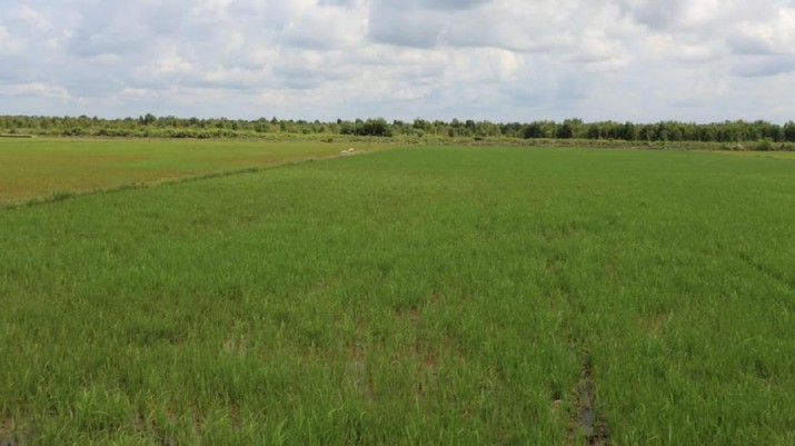 Rehabilitasi dan Peningkatan Irigasi untuk Pengembangan Food Estate di Kalteng Dimulai Oktober 2020 (Dok. PUPR)