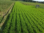 Tambah Blitar, Kawasan Korporasi Pertanian Semakin Meluas