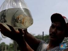 Ikan RI Ditolak China Gegara Corona di Kemasan, Ini Ceritanya