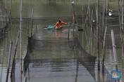Potret Petani Ikan Hias yang Cuan Gede Saat Pandemi Covid-19