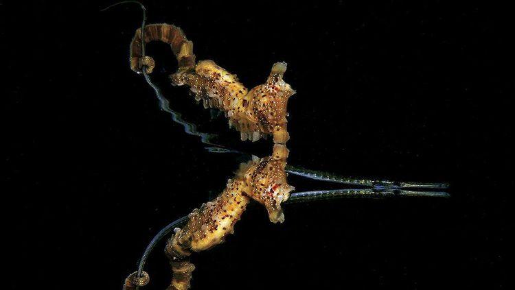 Aneka Foto Alam Bawah Laut yang Ajaib