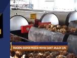 Ekspor Sawit Anjlok 5,9% Hingga AS Digugat Produsen Mobil