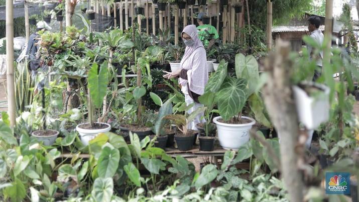 Ilustrassi Penjual Tanaman Hias (CNBC Indonesia/Muhammad Sabki)