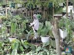 5 Tanaman Hias Paling Diminati, Harganya Tembus Rp 100 Juta