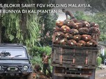AS Blokir Sawit FGV Holding Malaysia, Kebunnya di Kalimantan