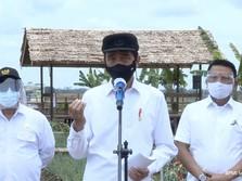 Ragam Pangan Food Estate Jokowi, dari Kentang ke Singkong