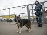 Anjing Biden Bikin Heboh, Gigit Orang di Gedung Putih