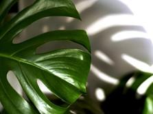 Bunda, Simak Tips Penting Merawat Tanaman Hias