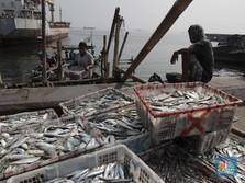 Terbaru Aturan Menteri KKP: Impor Ikan dan Garam Bakal Direm!