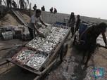 Nestapa Nelayan Dihantam Pandemi Covid-19 Hingga Cuaca Buruk
