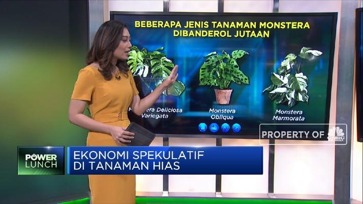 Janda Bolong dkk, Ekonomi Spekulatif di Tanaman Hias