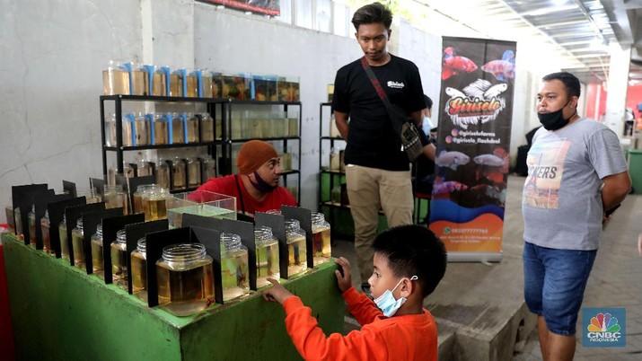 Pengunjung mengamati ikan cupang yang dipajang di Bazar ikan Cupang di Kawasan Pasar Gembrong Baru, Jakarta, Jumat (30/10). (CNBC Indonesia/ muhammad Sabki)