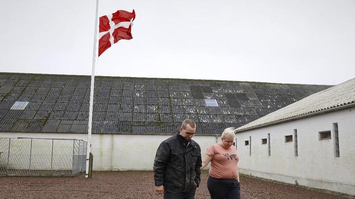 Ilustrasi peternakan cerpelai di Denmark. (AP/Claus Bjoern Larsen)