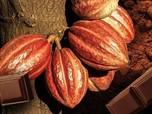 Bak Pahlawan, Pengusaha Ini Sukses Berdayakan Petani Kakao