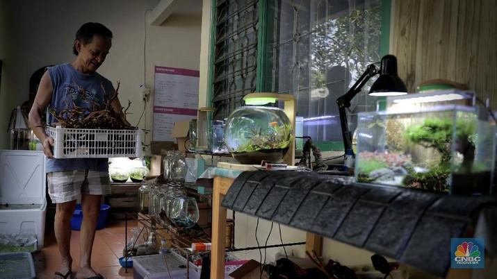 "Pelaku usaha menyelesaikan pembuatan Aquascape mini di Ciputat, Tangerang Selatan, Jumat (13/11). Pelaku usaha yang baru menjalankan bisnis tersebut selama Pandemi Covid-19 bisa menyelesaikan tiga buah pesanan aquascape mini yang ia jual dari Rp 300 ribu sampai Rp 600 ribu. Seorang pemilik aquascape Iskandar mengatakan bahwa bisnisnya ini dimulai sejak masa Pandemi. Hal tersebut, untuk beberapa orang menjadi peluang usaha baru di tengah kelesuan beberapa bidang usaha lainnya. ""Baru tujuh bulan memproduksi aquascape mini ini,"" cerita Iskandar, dari pemilik workshop Ninimizu Aquascape. Sebelum pandemi, Pak Iskandar memiliki usaha penyedia makanan kotak yang biasa diorder untuk acara-acara di hotel. ""Sekarang pesenan hampir gak ada lagi,"" katanya. Kini, pesanan aquascpe buatannya bisa mencapai 3 hingga 4 buah dalam seminggu. Aquascape merupakan seni mendekorasi pemandangan dalam akuarium ikan. Uniknya, dalam aquascape ini tak hanya sekadar meletakkan tanaman-tanaman bawah air, batuan, atau kayu-kayuan, melainkan juga menuntut estetika seni, ketelatenan, dan kesabaran yang tinggi. Menurut nya, meskipun terlihat sederhana, tetapi kegiatan aquascaping ini ternyata diminati banyak orang . Cara membuat aquascape yang pertama bagi pemula adalah dengan mengumpulkan bahan-bahan yang diperlukan, di antaranya; aquarium, lampu, pasir silica, pupuk dasar atau pupuk cair, tanaman, ikan. (CNBC Indonesia/ Muhammad Sabki)"
