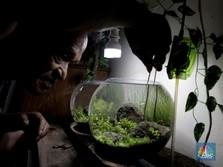 Intip Bisnis Aqua Miniscape, 'Seribu' Jalan Cuan Kala Pandemi