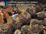 Ckckck....Harga CPO Tembus Rekor Lagi, RM 3.400/ton