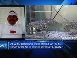 DPR MInta KKP Cabut Izin 14 Perusahaan Ekspor Benih Lobster