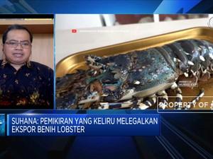 Kebijakan Ekspor Benih, Rugikan Nelayan & Pembudidaya Lobster