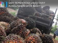 Sah! Pemerintah Ubah Tarif Pungutan Ekspor Sawit