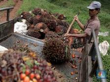 Produksi Bakal Kurang, Harga CPO Melesat Lagi ke RM 3.436/ton