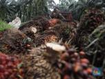 Duh! Sri Lanka Setop Impor Minyak Sawit, Batasi Perkebunan