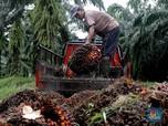 Ekspor RI Meroket Hampir 20%, Harga CPO Menguat tapi Tipis