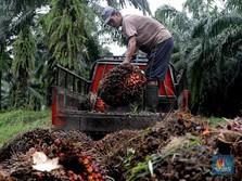 CPO Naik 1% Lebih, Harga Tembus RM 3.400/ton Lagi